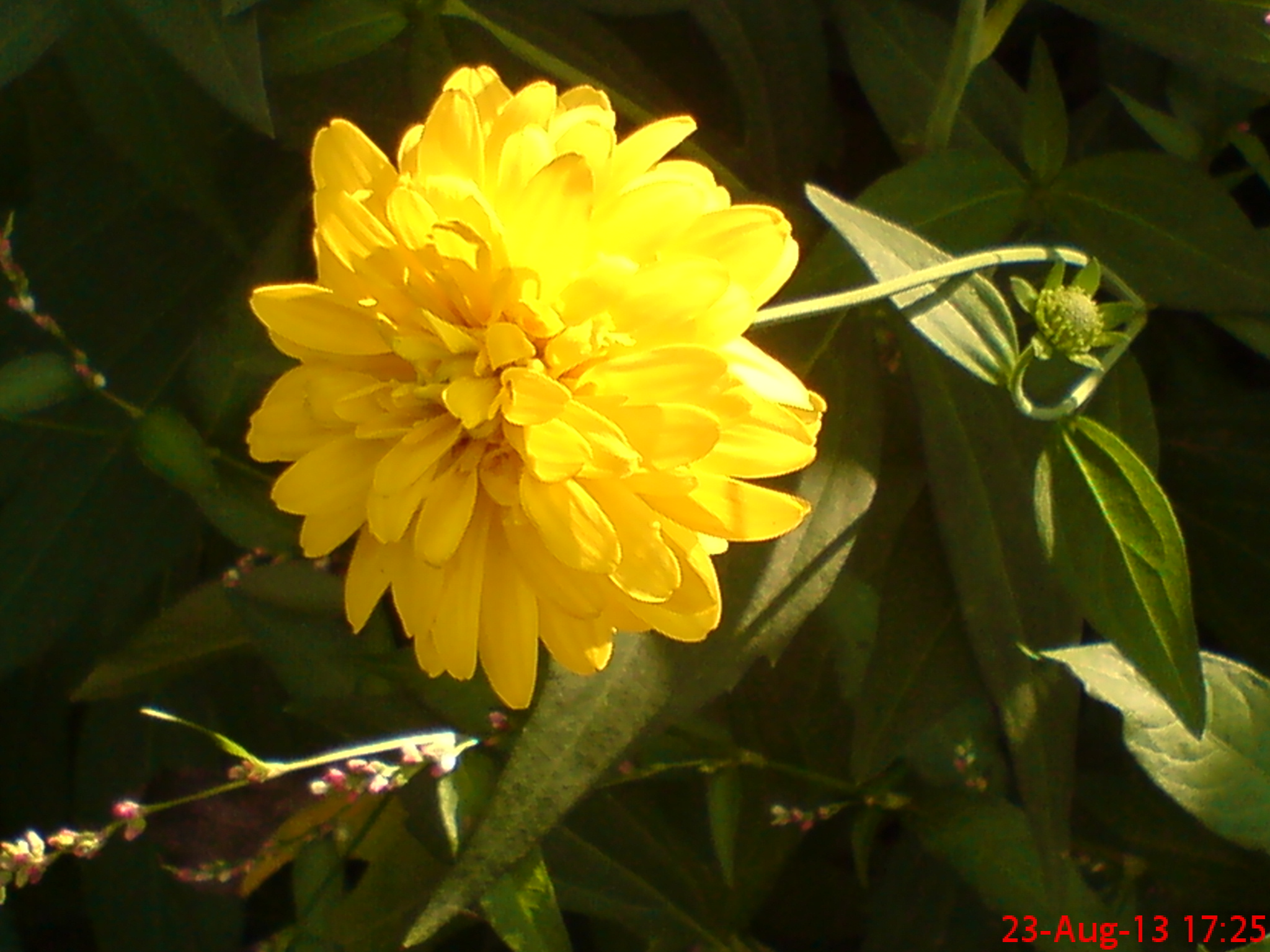 beautiful yellow flower